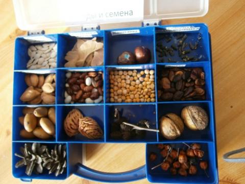Коллекция семян своими руками